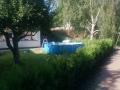 Nyplanterad thujahäck i Farsta