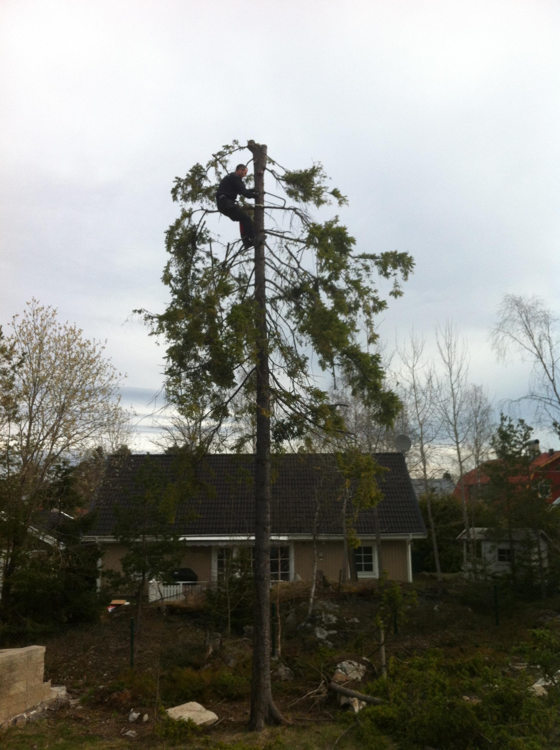 Vi kan även fälla träd med hjälp av våra samarbetspartners.
