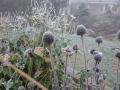 Tänk på att välja växter med fina överblommade stänglar