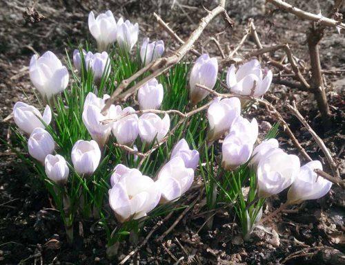 Vår- och höststädning