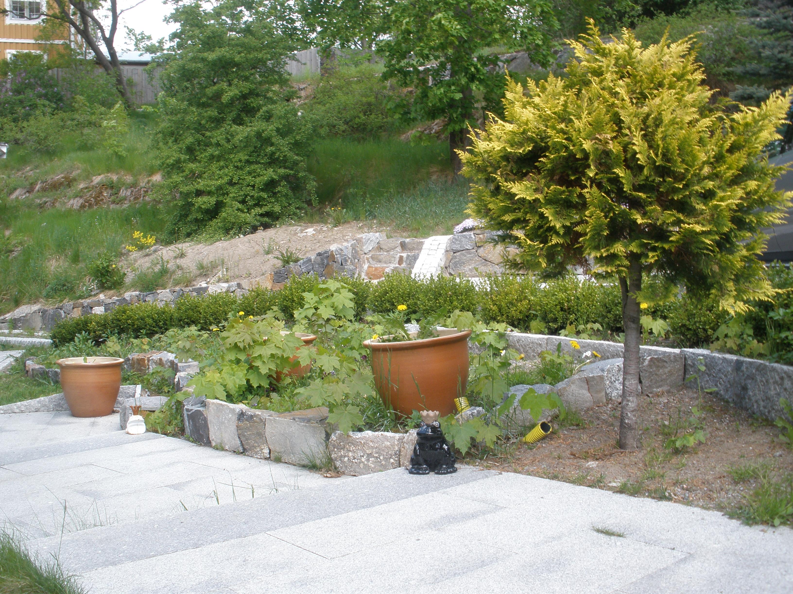 Övergiven plantering, villatomt Saltsjö-boo