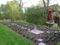 Nyplantering snittblommor, Lidingö
