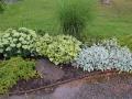 Växter vars blad är det främsta prydnadsväret. Kaukasisk förgätmigej, lammöra, stephanandra och glansmiskantus.